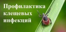 """Горячая линия профилактики """"клещевых"""" инфекций"""